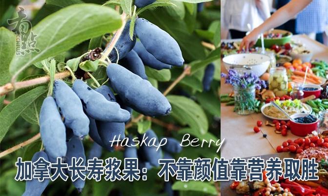 加拿大长寿浆果:蓝靛果不靠颜值靠营养